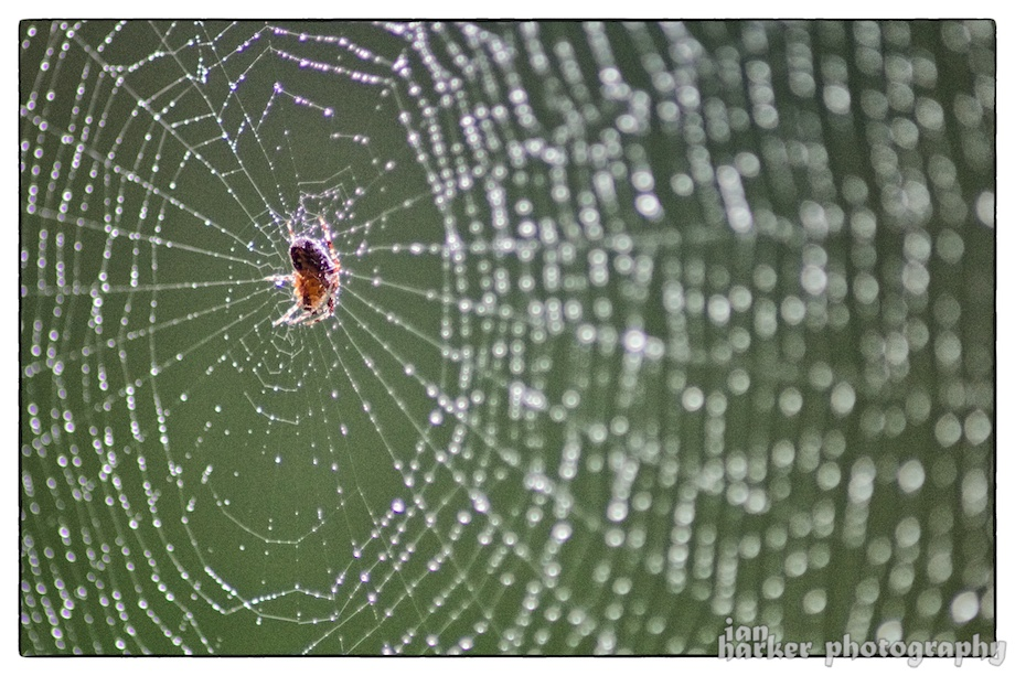2014-09-27-The Web